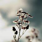 Flower with Drop by dedakota