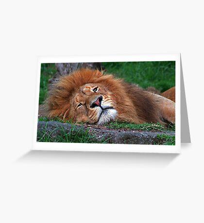 Laid Back Lion Greeting Card