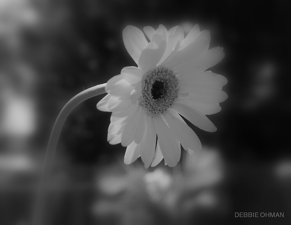 Beauty in Blk and Wht by DEBBIE OHMAN