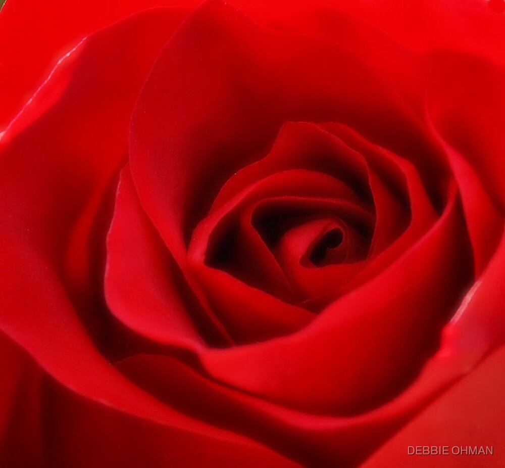 A Red Rose by DEBBIE OHMAN