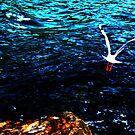 Hypergull by Luke Jones