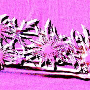 Pink thistles by sarahgee
