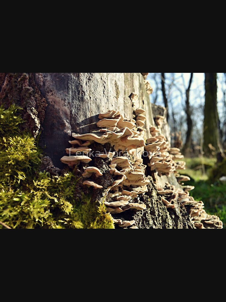 Polypores and moss by Trin4ever