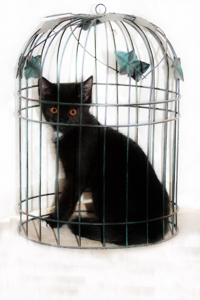 Feeling Caged Up! by minnielee