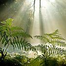 Woodland Ferns by BlueShift