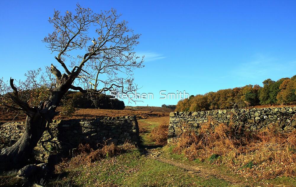 Autumn Walk by Stephen  Smith