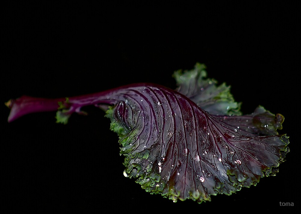 chinese kale? by toma