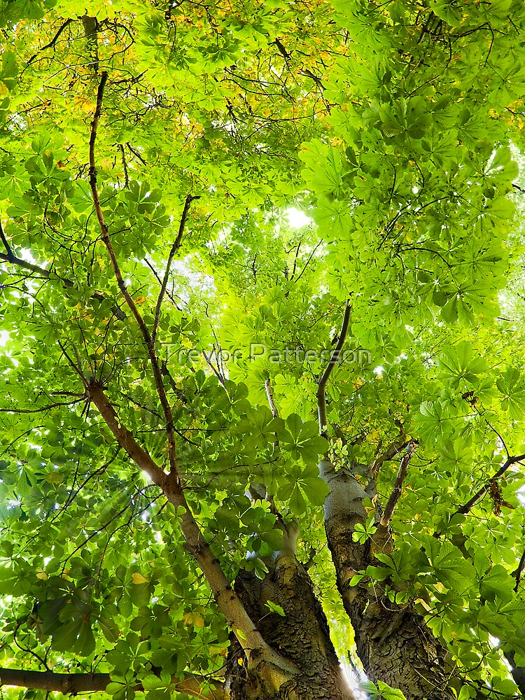Looking Up by Trevor Patterson