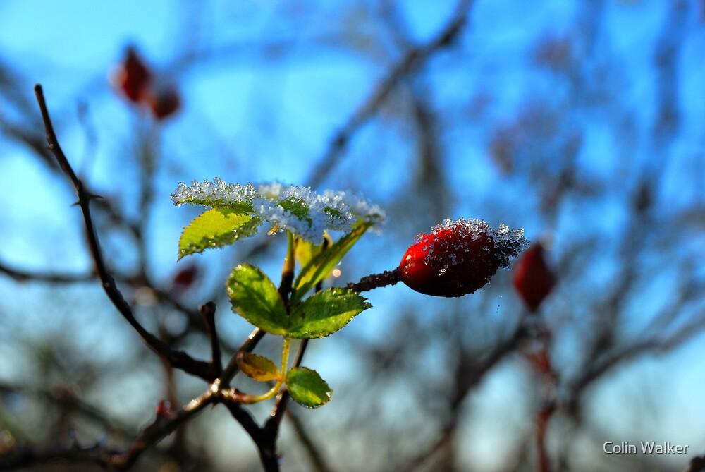 Frost 2 by Colin Walker