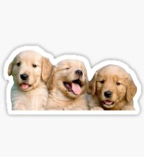 Golden Retriever Puppies Sticker