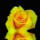 Reflection Of A Rose by Michael Reimann