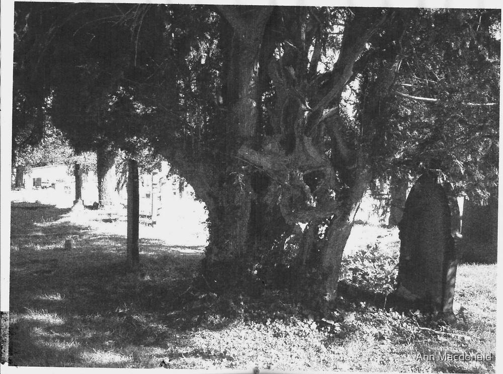 spooky looking tree by Ann Macdonald