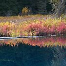 Little Crater Lake by lwaltrip