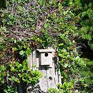 Bird House by lwaltrip