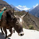 Mt. Everest and Ama Dablam between the horns of a yak by Roi Brandeis by MichaelBr