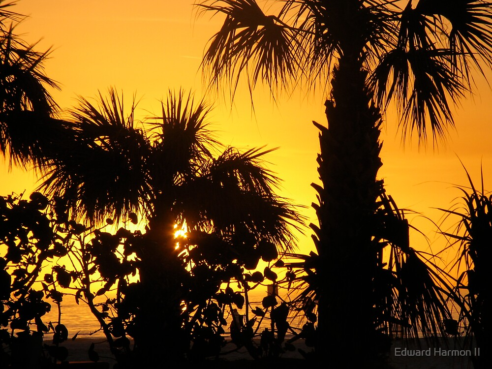 Sunset and Palms by Edward Harmon II