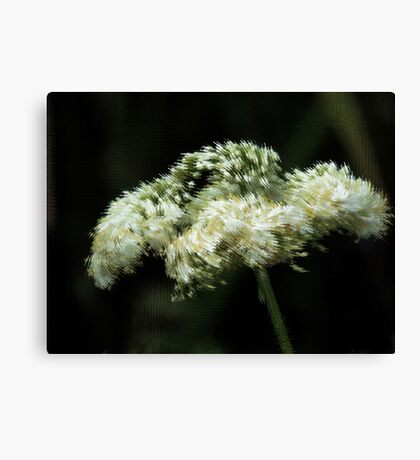 Elderberry Floral Abstract    Canvas Print