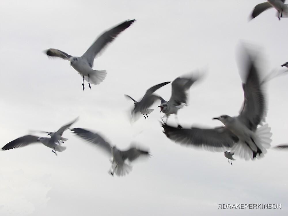 GULLS IN FLIGHT by RDRAKEPERKINSON
