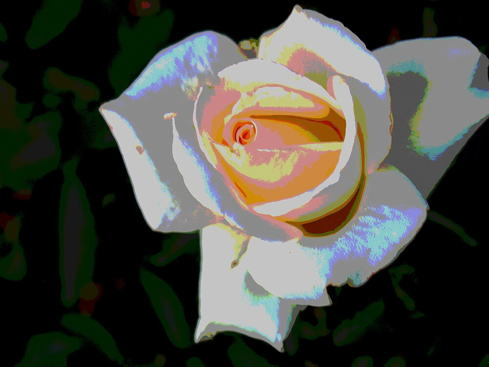 Rose by Carole Rogers