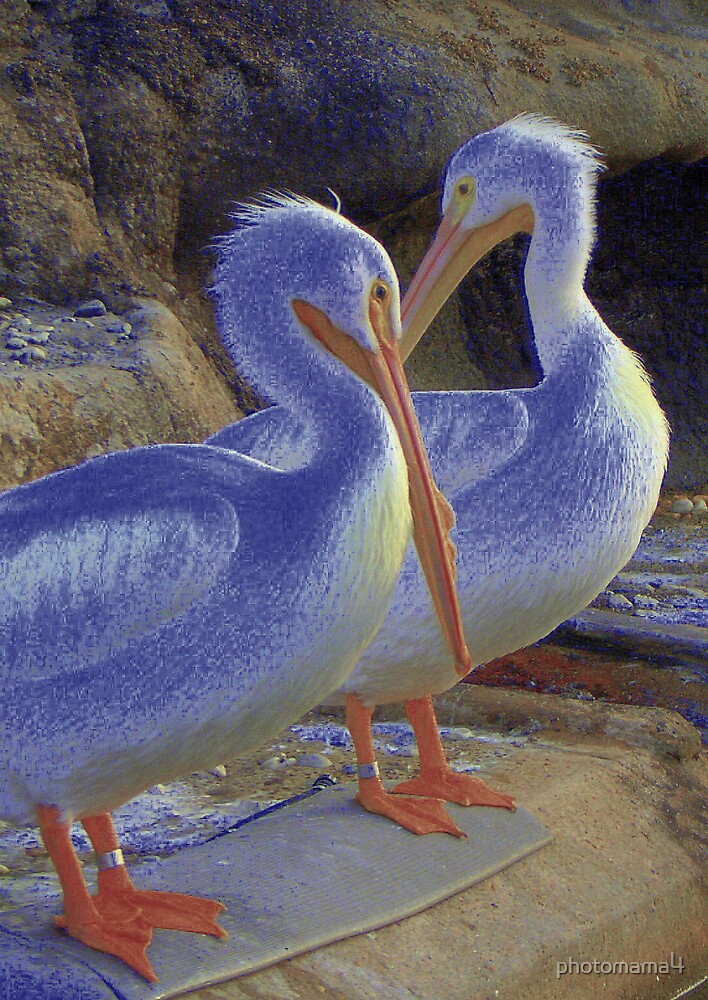 Pelicans #2 by photomama4