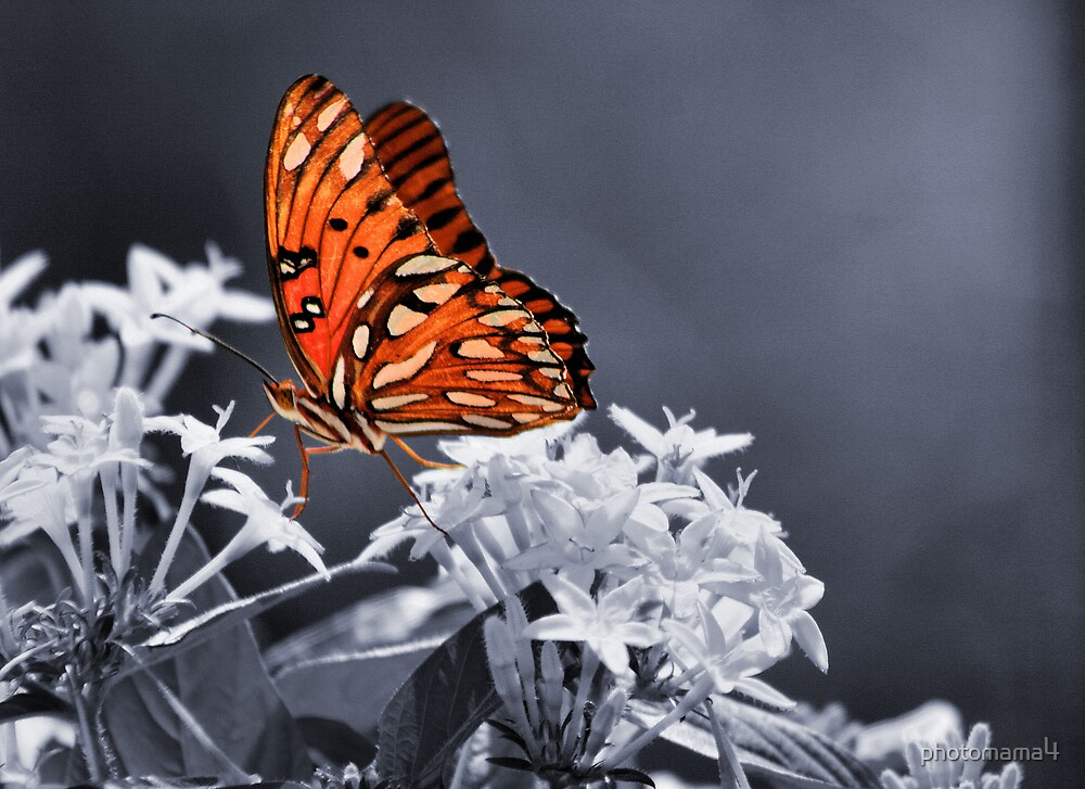 Butterfly sc by photomama4