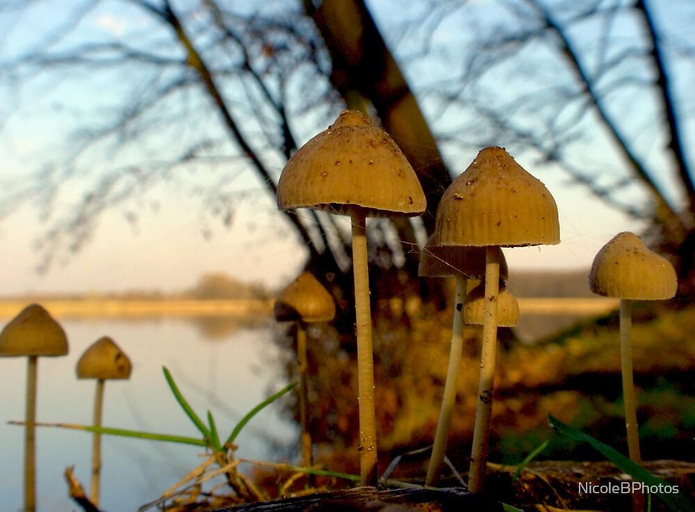 Another world - mushrooms at lake by NicoleBPhotos