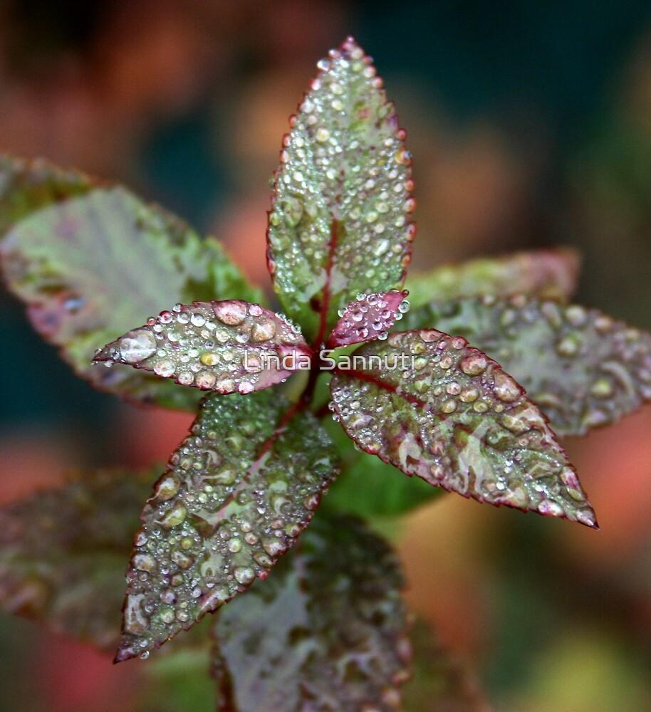color of rain by Linda Sannuti