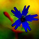 fire pink blue by coopphoto