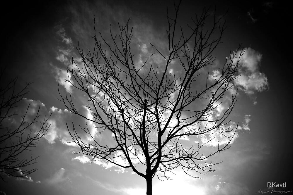 Lone Tree by RKastl