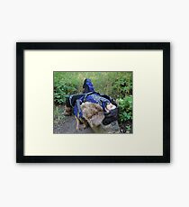 The Prince in Repose Framed Print