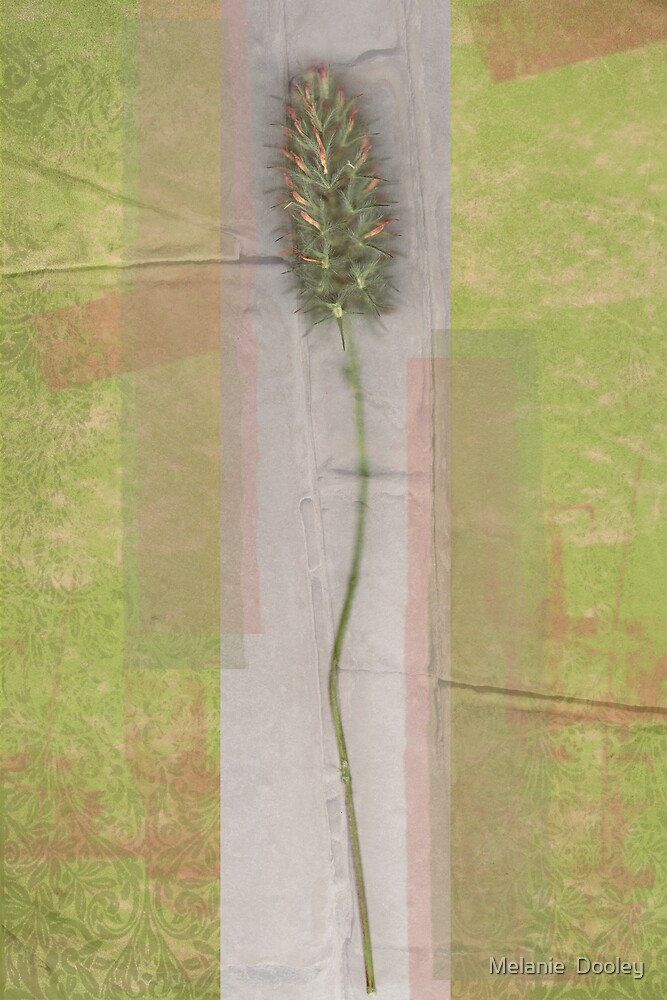 A Bit of Grass by Melanie  Dooley