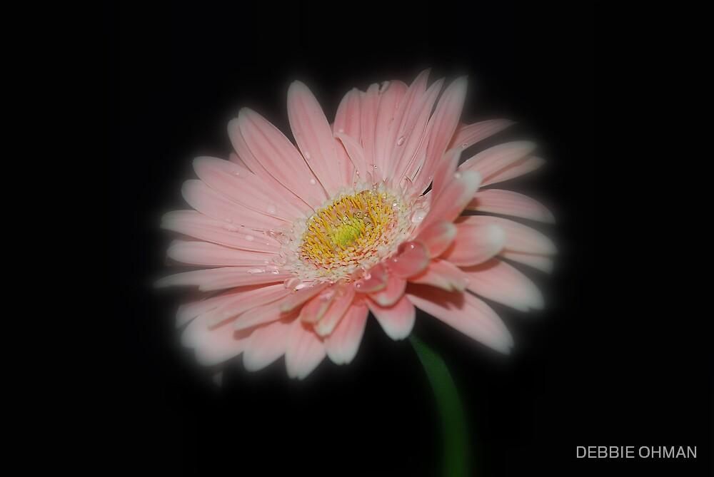 Pink by DEBBIE OHMAN