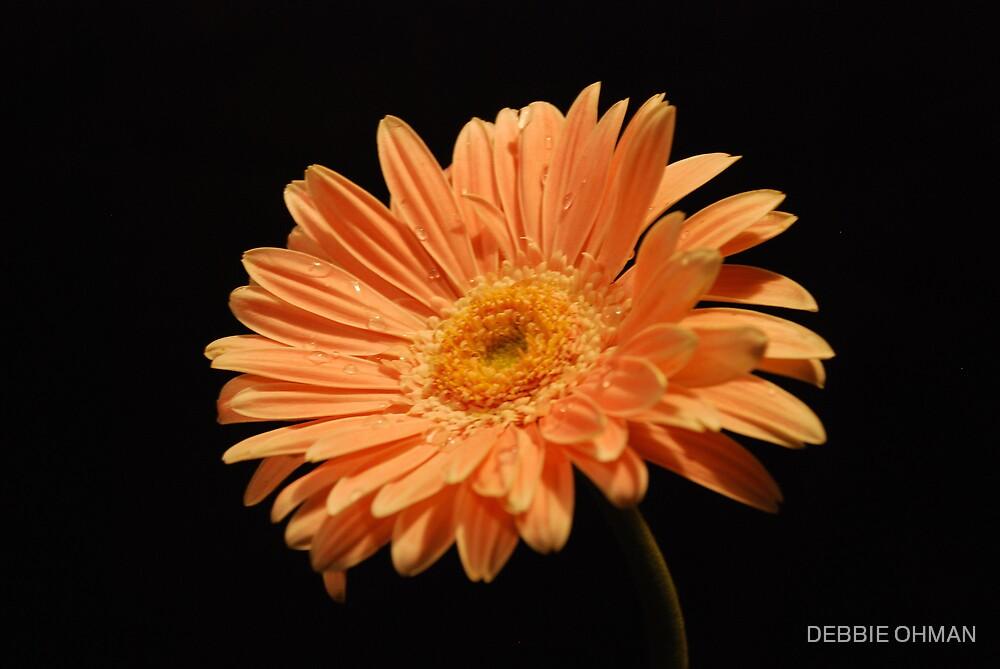 Pretty in Orange by DEBBIE OHMAN