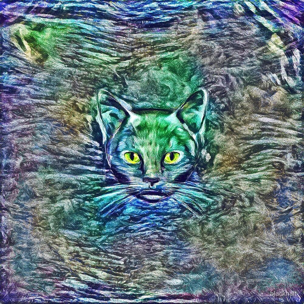 Maritime cat by blackhalt