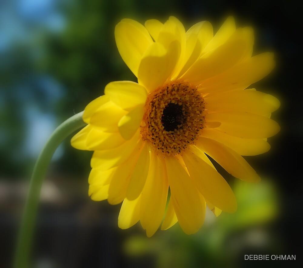Sun Kissed by DEBBIE OHMAN