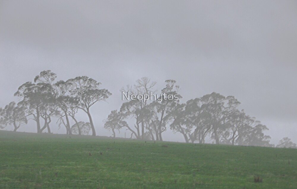 Misty Gums by Neophytos
