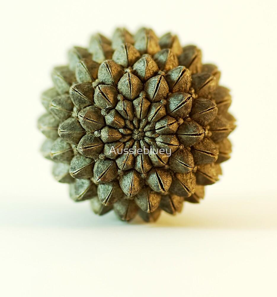 Seed Pod. by Aussiebluey