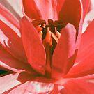 Red Bloom by Teody Gaspar