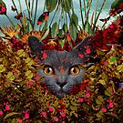 Chartreux II by DIVIDUS *