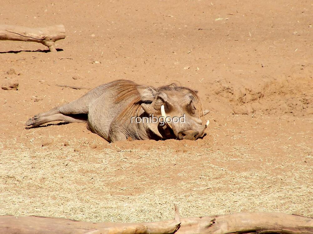 Warthog by ronibgood
