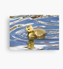 Little duckling Canvas Print