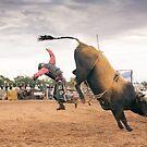 Bull Flight by Natalie Ord
