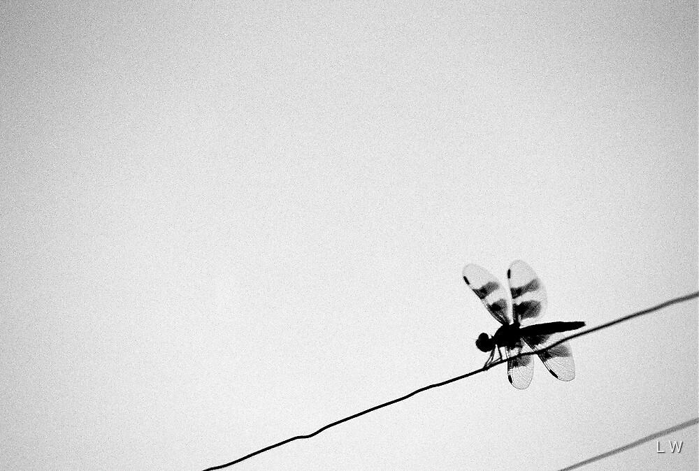 Wired by Alyssa Medina