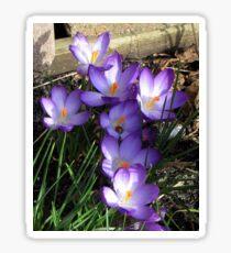 Easter Crocuses Sticker