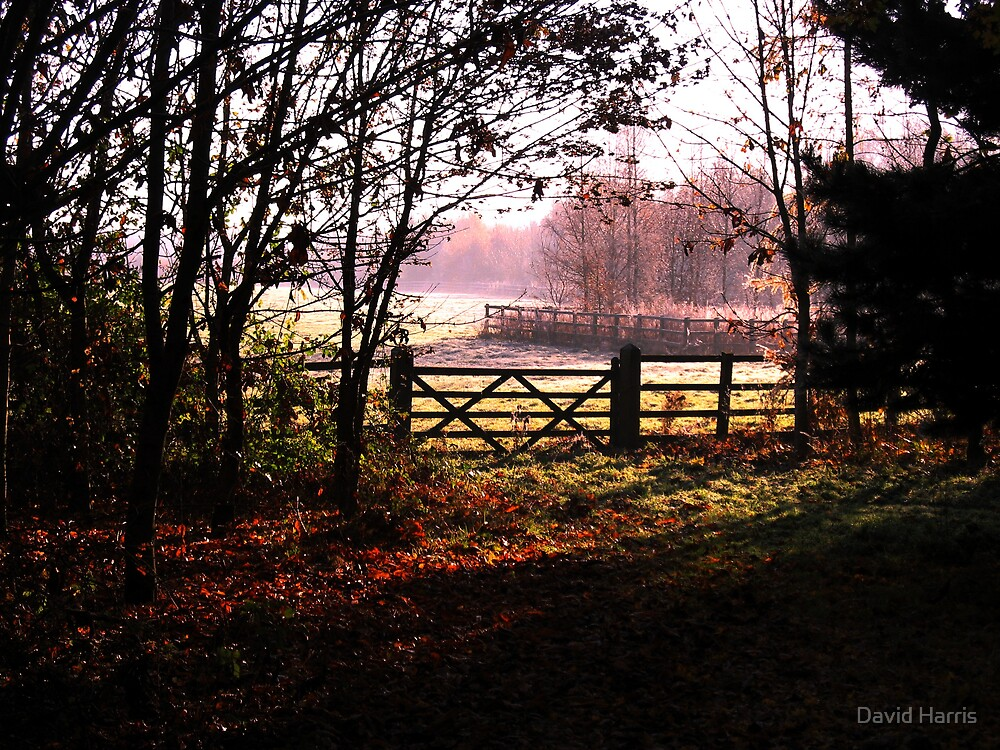 Autumn Morn by David Harris