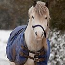 Pony in the snow by LisaRoberts