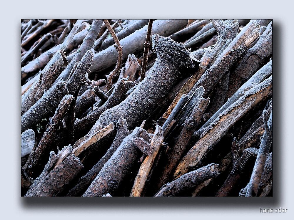 frozen wood by hans eder