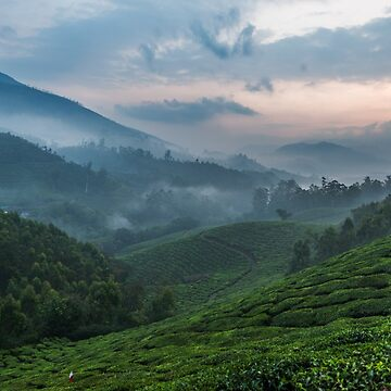 Early morning fog, Munnar by berrega