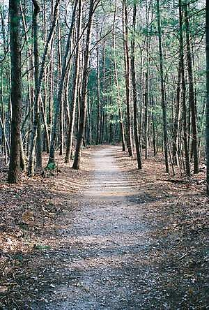 Wooded Path Lake James by Laura Howard