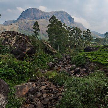 Anamudi mountain, Munnar by berrega